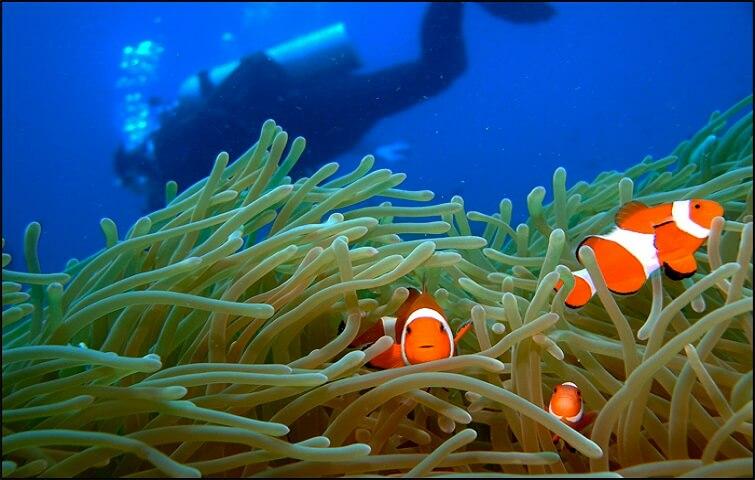 Nemo vue en plongée