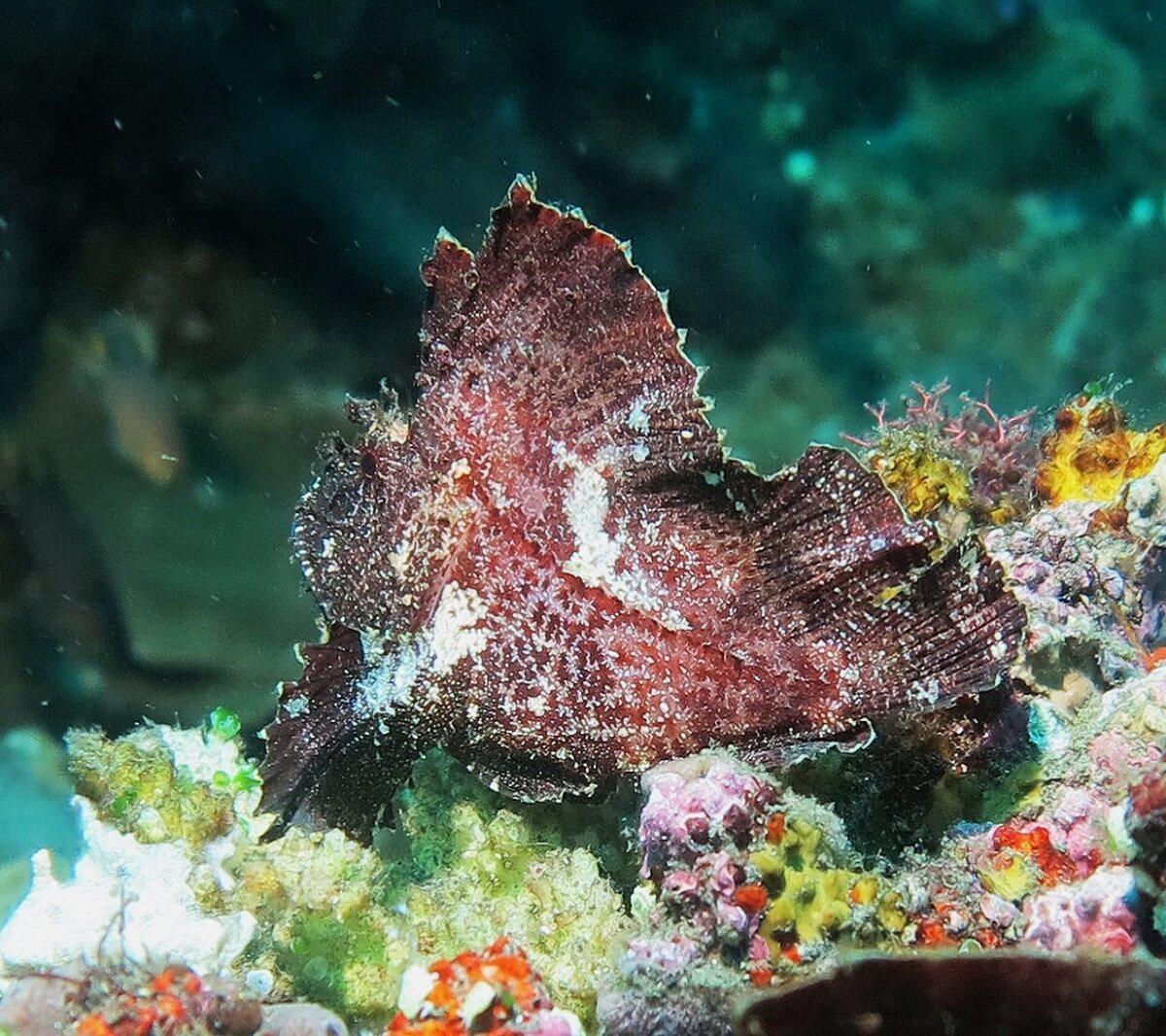 Tulamben beautée sous marine