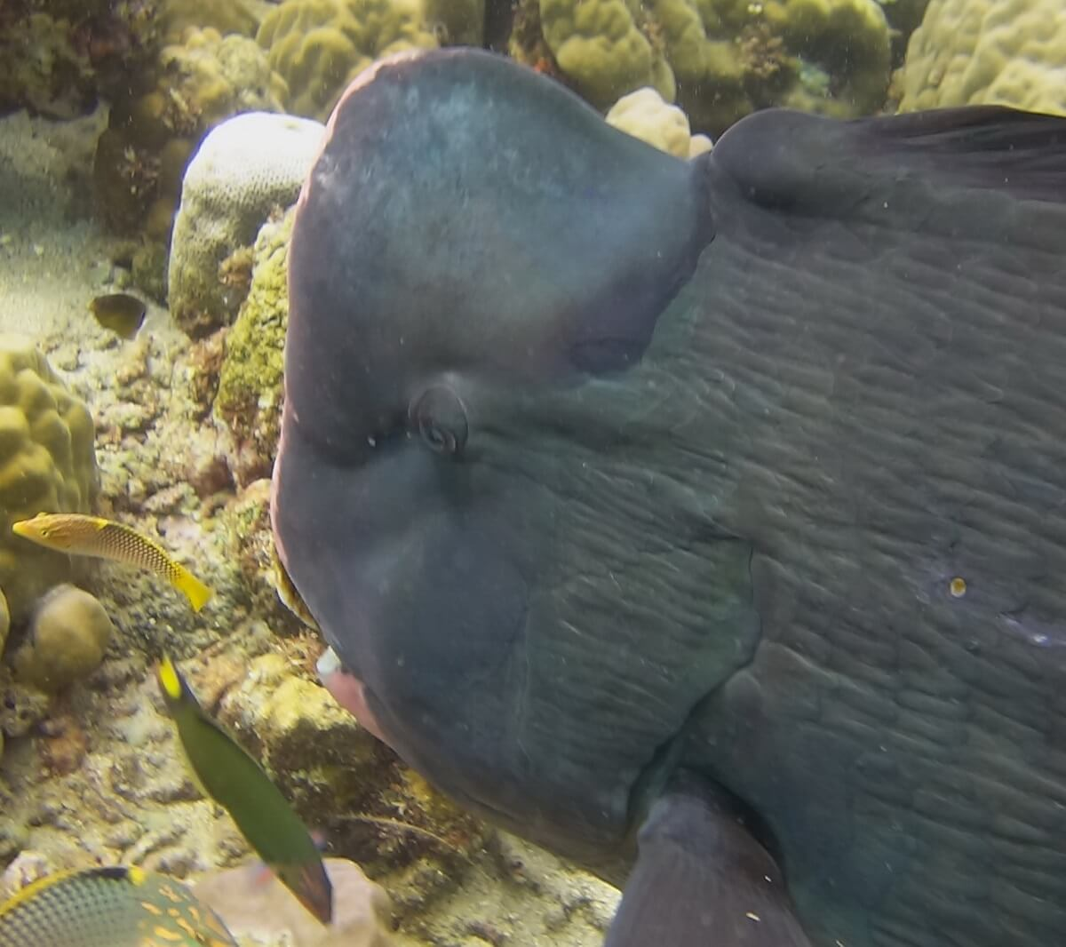 La vie marine de Tulamben