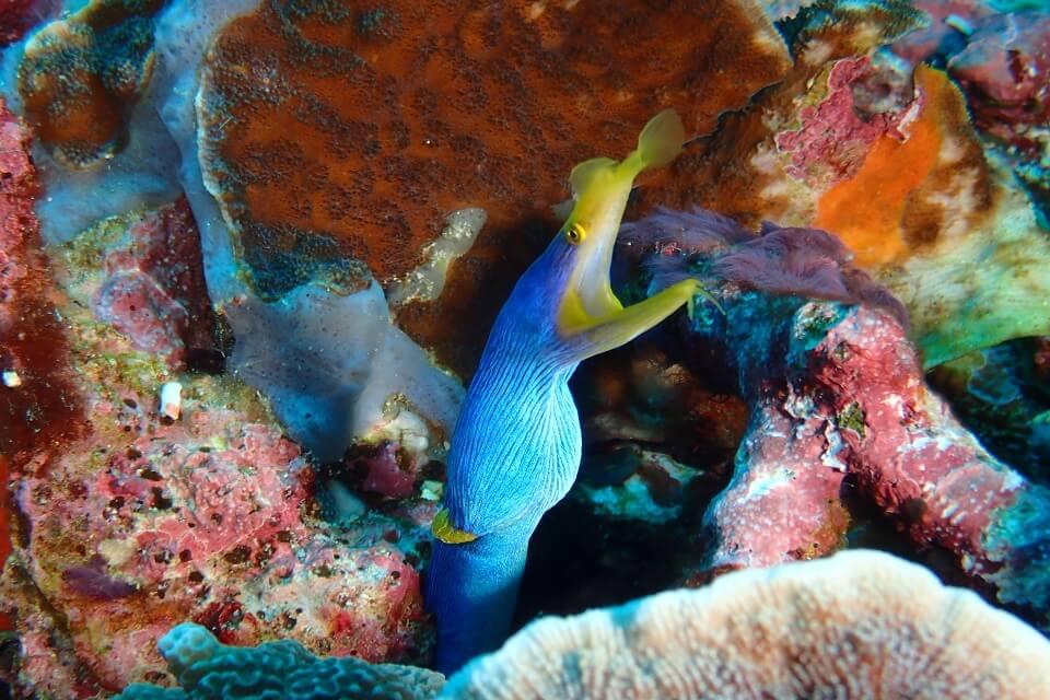 photographie sous marine à Tulamben