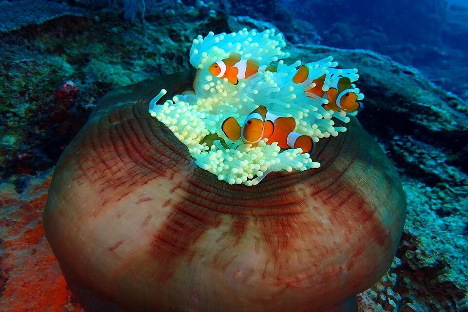 Petit Nemo à Tulamben