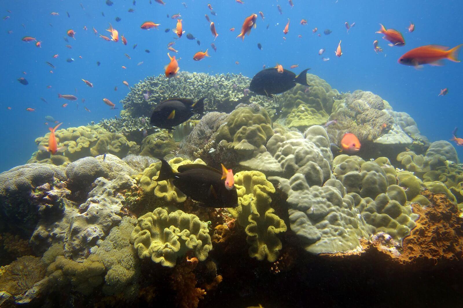Toayapake, Nusa Penida