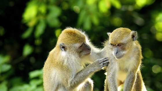 des singes amicaux
