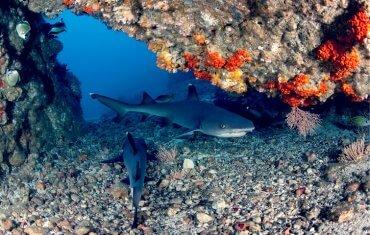 Cave aux requins de Gili Tepekong